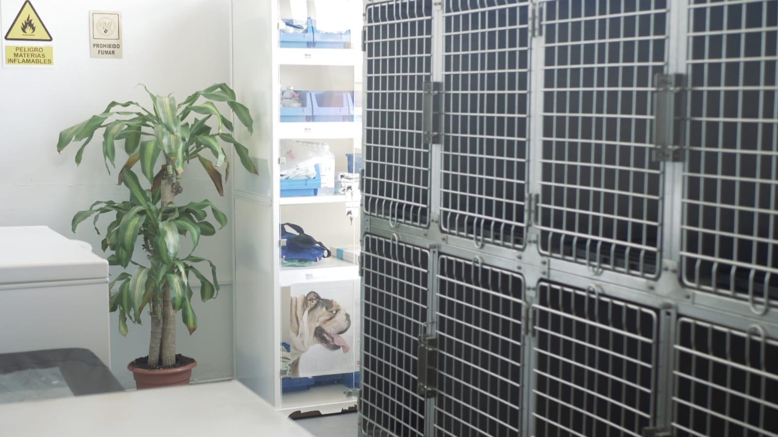 Pediatría veterinaria